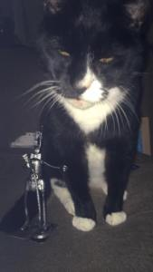 Even cats like our robots
