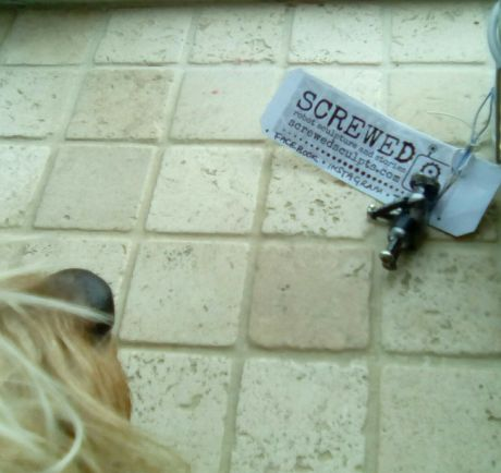 One of our four legged fans