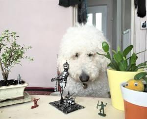 Dogbot