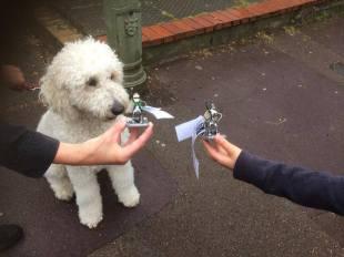 Double dog bot!